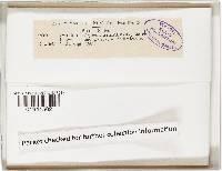 Cystoderma granosum image