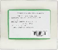 Hebeloma crustuliniforme image