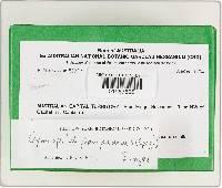 Gymnopilus pampeanus image