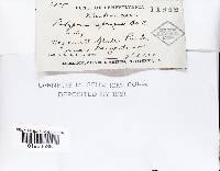 Fomitopsis spraguei image