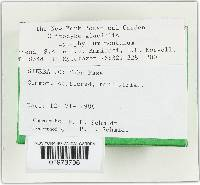 Clitocybe glacialis image