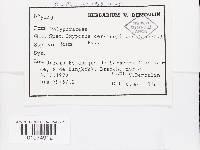 Oxyporus cervinogilvus image