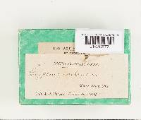 Polyporus epileucus image