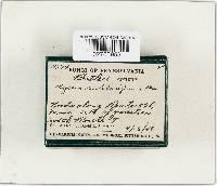 Mycena rutilantiformis image
