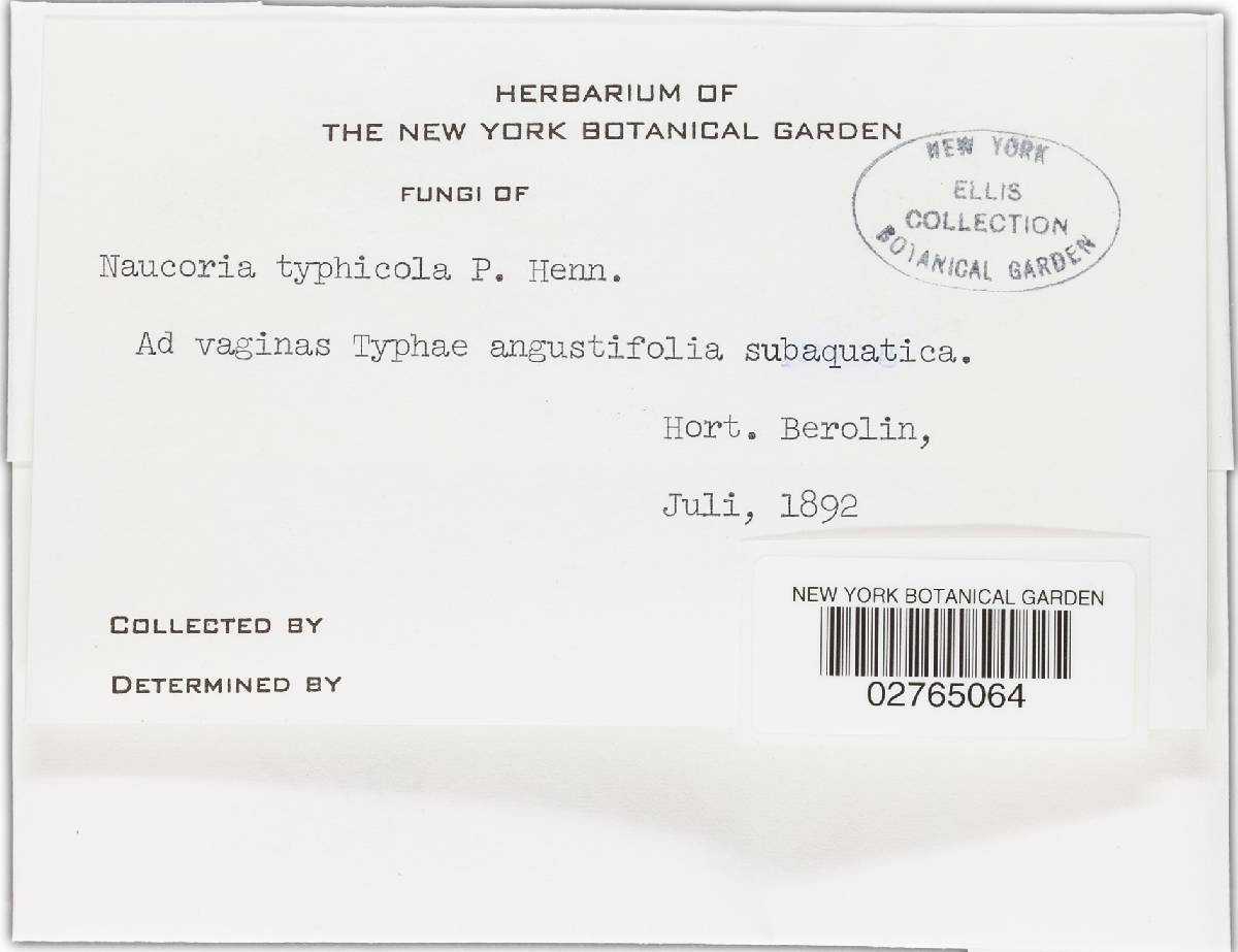 Naucoria typhicola image