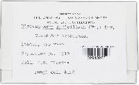 Erysiphe penicillata image