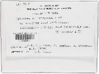 Hypocrea chromosperma image