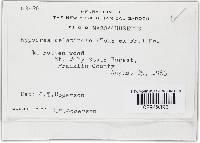Hypocrea gelatinosa image