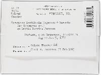Hypomyces leotiicola image
