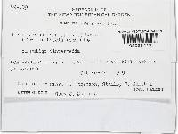 Nectria candicans image