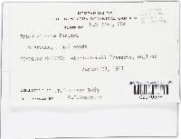 Trichoglossum farlowii image