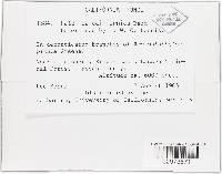 Patellea californica image