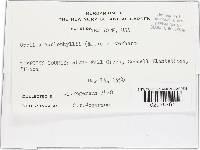 Orbilia caulophylli image