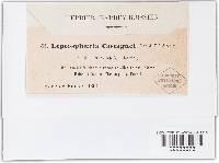 Leptosphaeria castagnei image