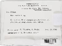Image of Hymenochaete tuberculosa