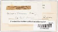 Anthostomella tomicum image