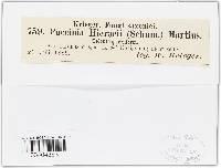 Puccinia hieracii image