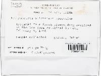 Arthrobotrys oligospora image