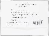 Oidium ruborum image