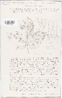 Mycocentrospora acerina image