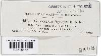 Cercosporella apocyni image