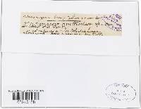 Cercospora aristolochiae image