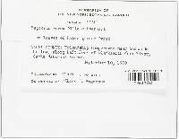 Septoria aurea image