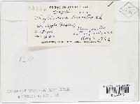 Mycosphaerella pomi image