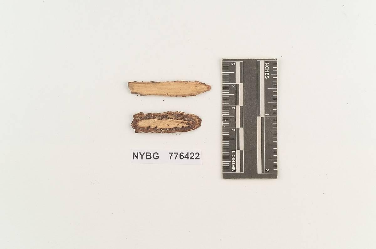 Xerocarpus image