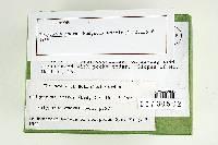 Tyromyces amarus image