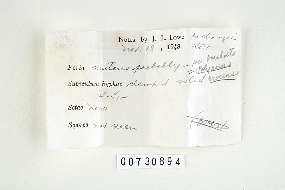 Polyporus pini-canadensis image