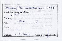Gymnopilus ludovicianus image