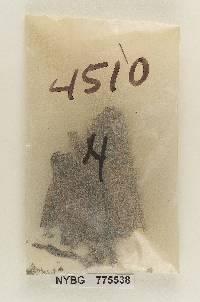 Resupinatus alboniger image