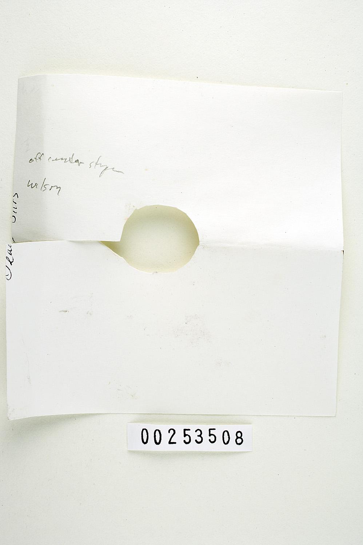 Russula avellaneiceps image