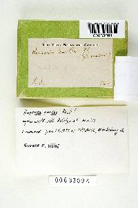 Russula earlei image