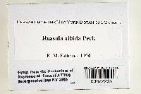 Russula albida image