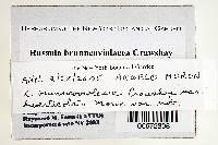 Russula brunneoviolacea image