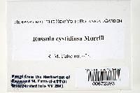 Russula cystidiosa image