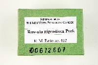 Russula nigrodisca image