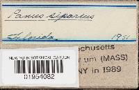 Lentinus tephroleucus image