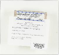 Hygrocybe pratensis image