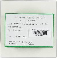 Armillaria zelleri image