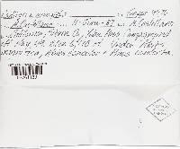 Pyrenogaster atrogleba image