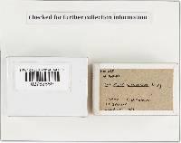 Tulostoma fimbriatum image