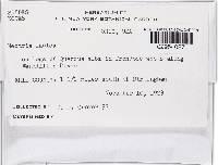 Hypomyces tremellicola image