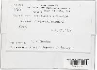 Neonectria discophora image
