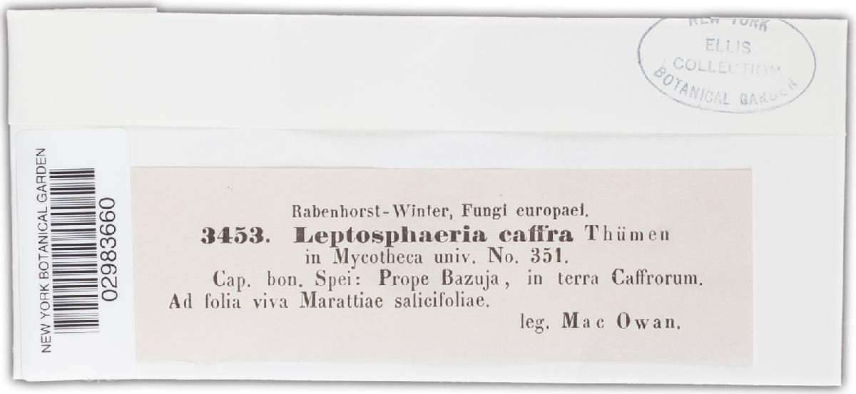 Leptosphaeria caffra image