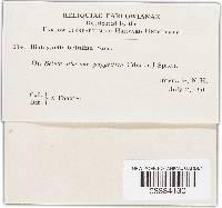 Diatrypella betulina image