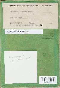 Pyrenopolyporus nicaraguensis image