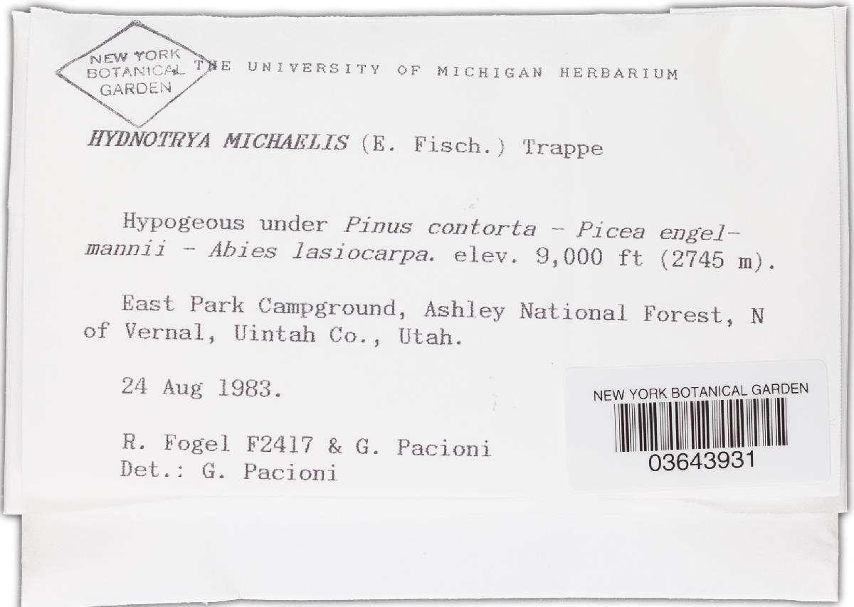 Hydnotrya michaelis image